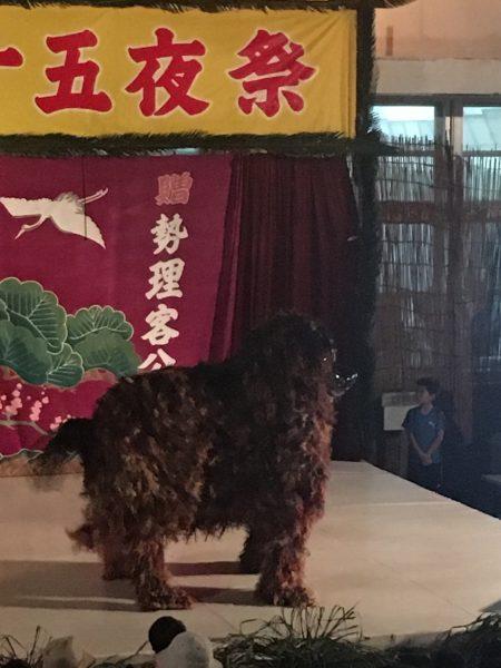 勢理客の十五夜祭り シーシーカンカンに萌え❤️の写真10